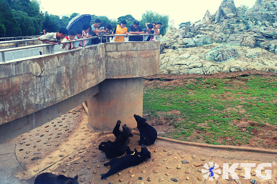 Bears at Pyongyang zoo in North Korea. Welcome to the Korea central zoo! Tour arranged by KTG Tours