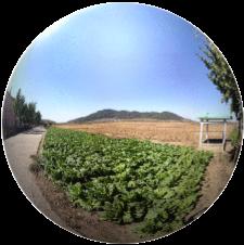 Chongsanri Cooperative Farm, DPRK 360°