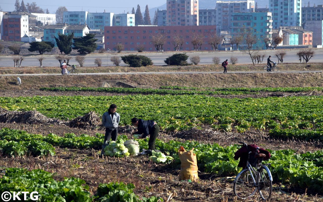 Granjeros en las tierras de la Granja Chongsan