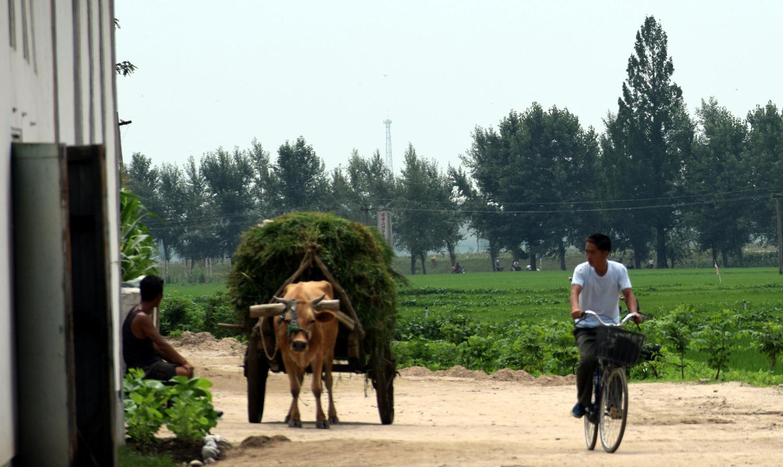 Cooperative Farm