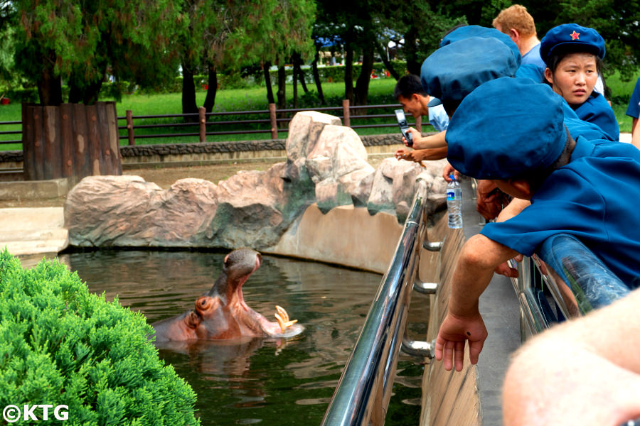 Hippo at the Pyongyang Central Zoo in the capital city of North Korea, DPRK. Tour arranged by KTG Tours
