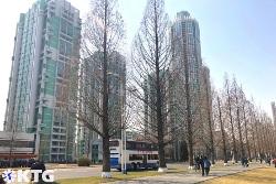 Ryomyong street in Pyongyang in late winter