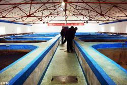 Salmon breeding fish farm in Sonbong, Rason, economic zone in North Korea bordering China and Russia