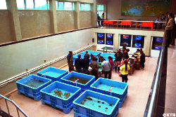 Rason Taehung Trading Corporation in North Korea. Travellers seeing seafish at the factory. The food can be cooked on the spot.