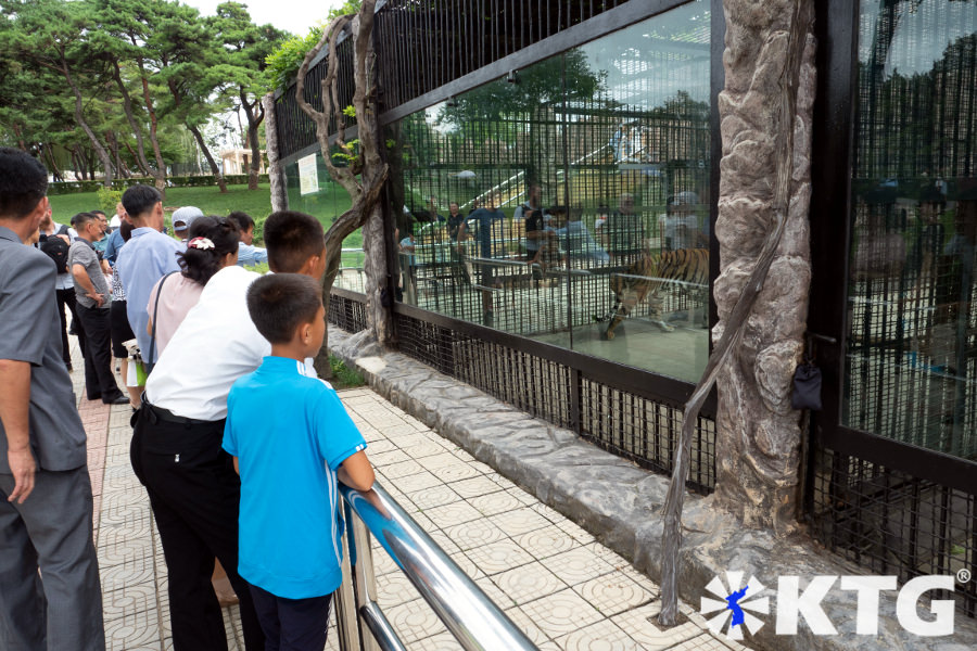 North Koreans looking at tigers at Pyongyang Zoo. The Korea central zoo has over 760 species of animals. Picture taken by KTG Tours