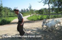 Granja en Corea del Norte