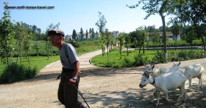 North Korean farmer