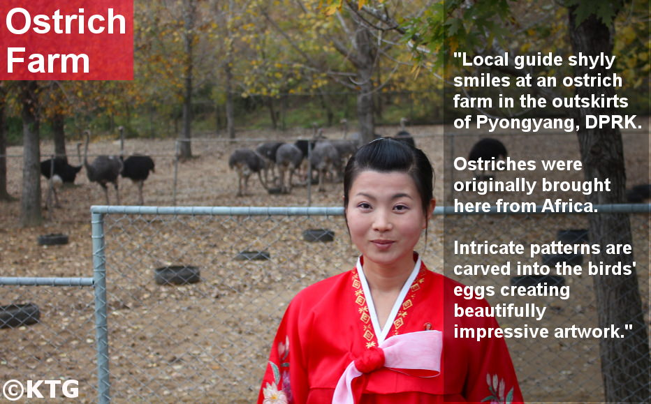 Ostrich farm in the outskirts of Pyongyang in North Korea (DPRK) with KTG Tours