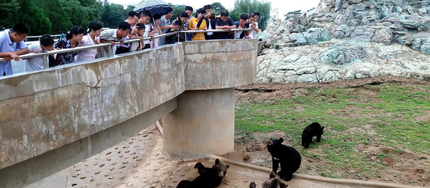 Zoo de Pyongyang