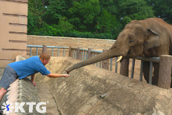 KTG traveller feeding an elephany at Pyongyang zoo