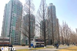 Rue Ryomyong à Pyongyang à la fin de l'hiver