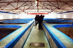 Salmon breeding fish farm in Sonbong, Rason, economic zone in North Korea bordering China and Russia